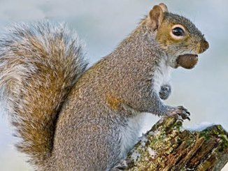 featureed ahnuts