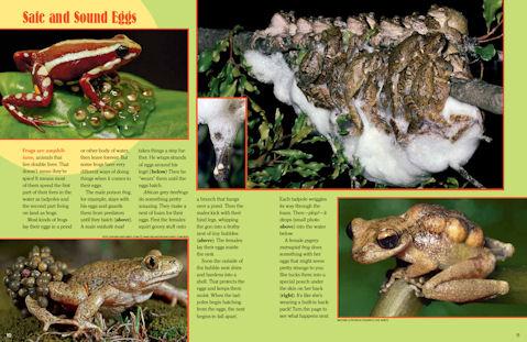 frog spread 3