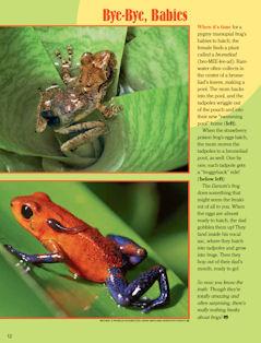 frog spread 4