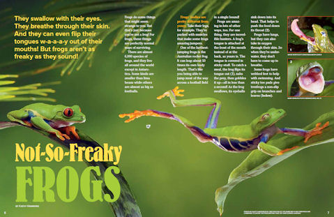 frog spread 1