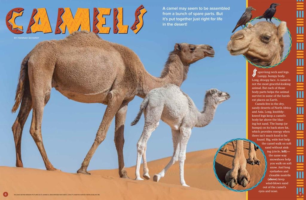 Camels Sept 2018 RR