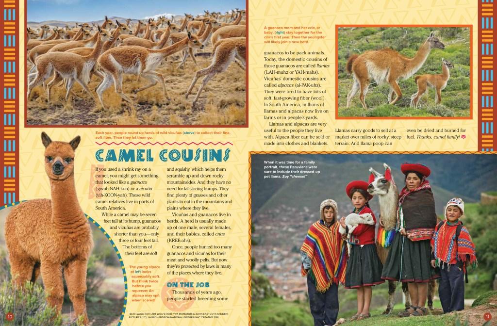 Camels Sept 2018 RR-3