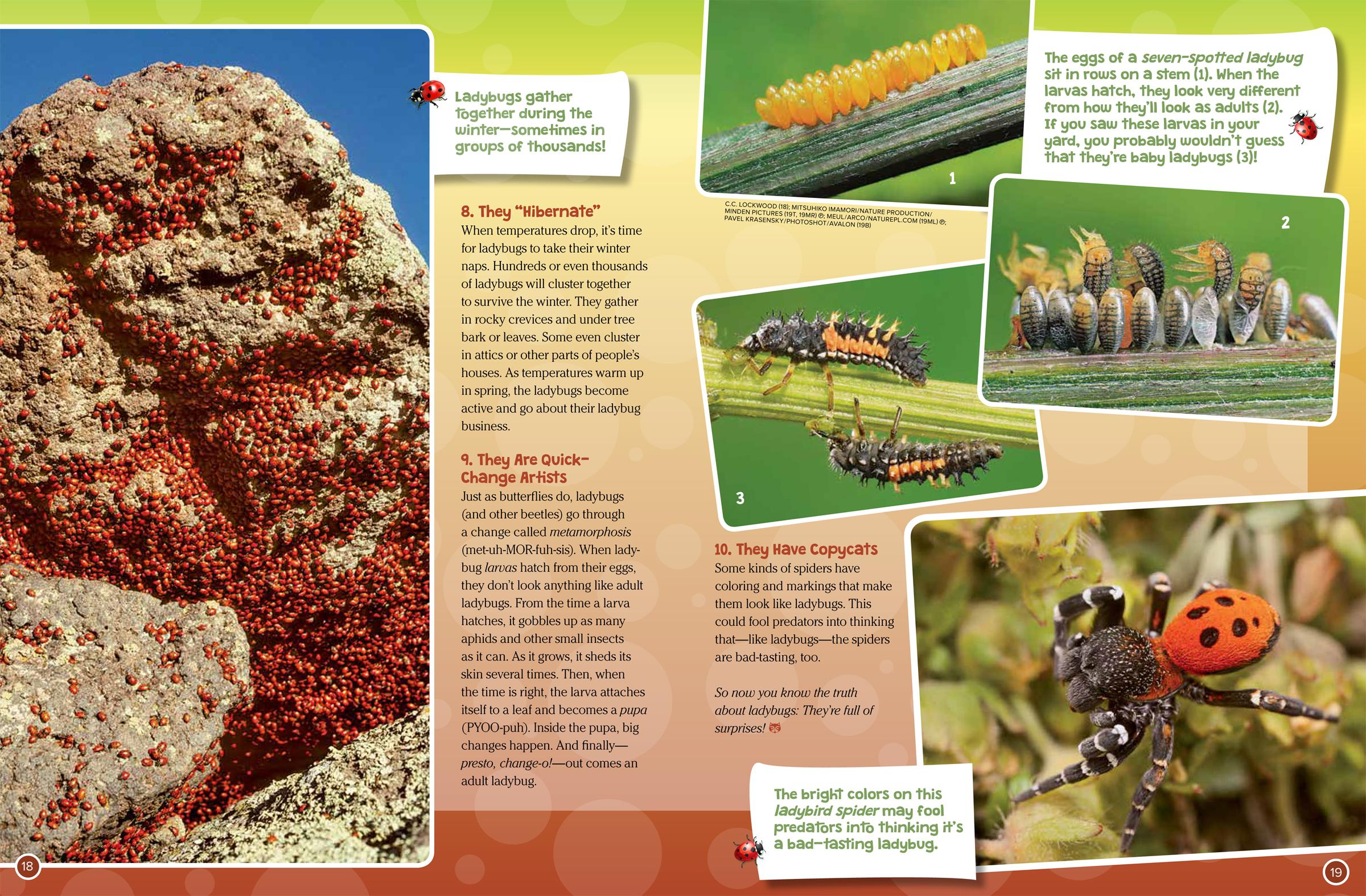 10 Big Surprises About Ladybugs - NWF | Ranger Rick