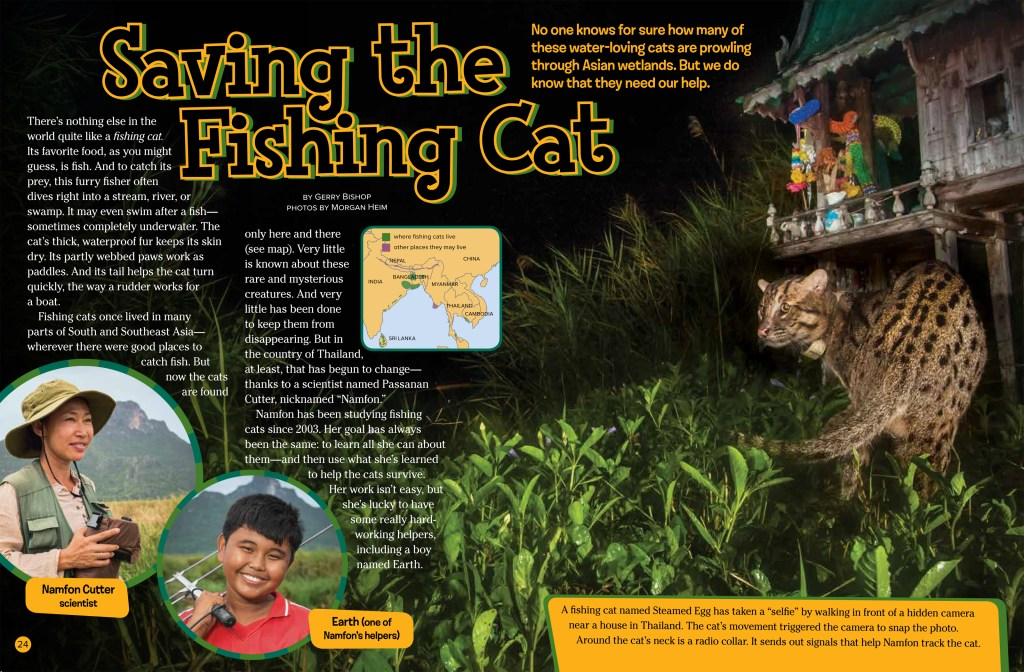 Fishing Cats Sept 2018 RR