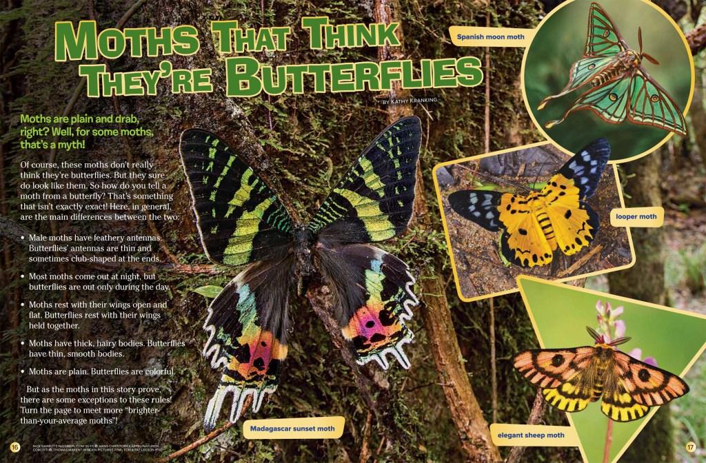 Moths Sept 2018 RR-1