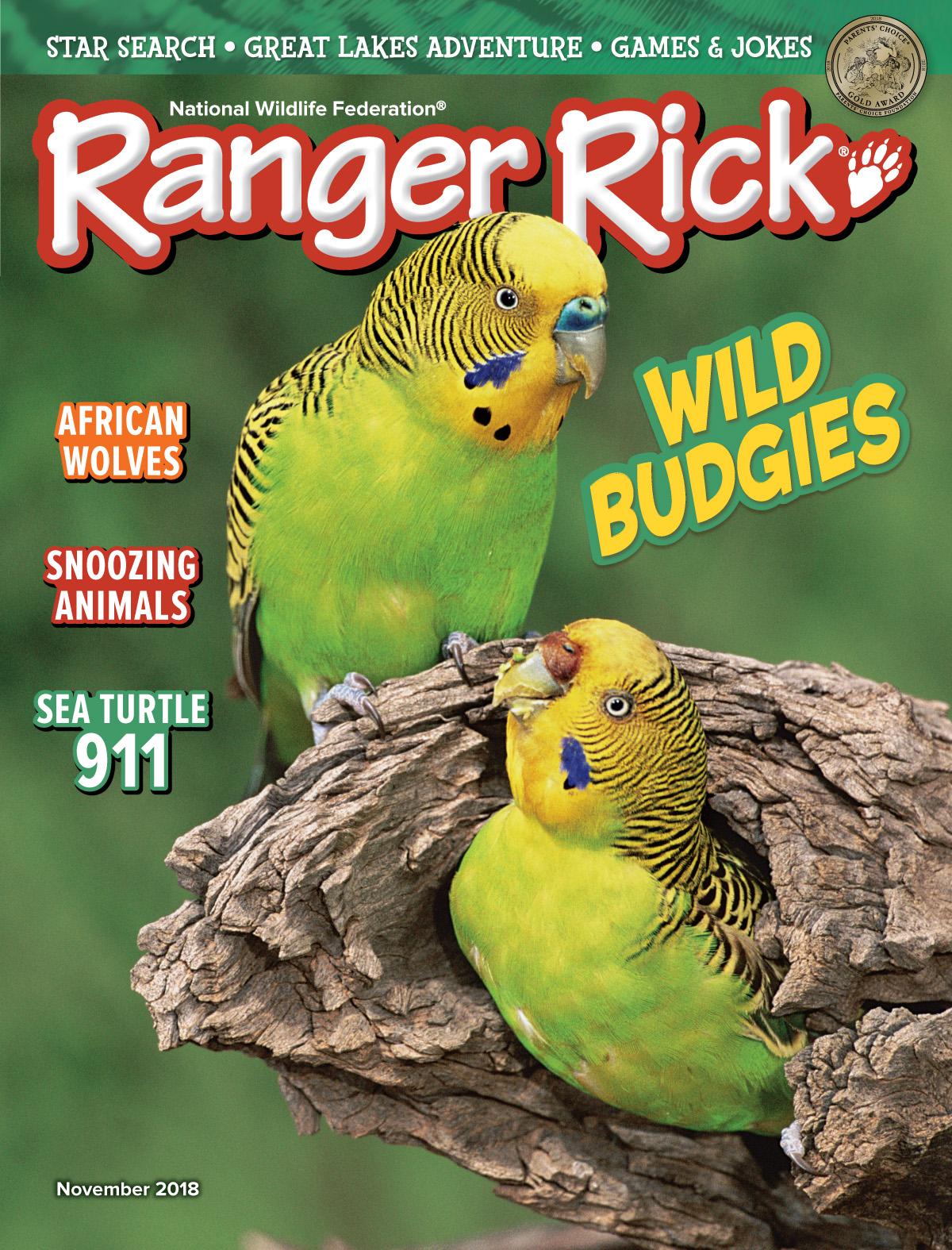 Budgie Boom! - NWF | Ranger Rick