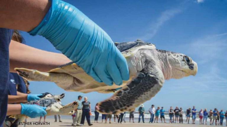 Sea Turtle 911