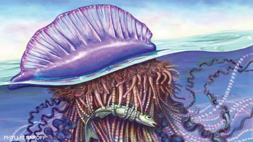 Meet the Man-of-War