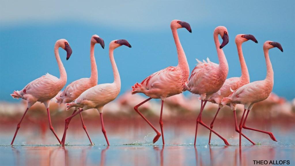 Weird, Wacky, and Pink!