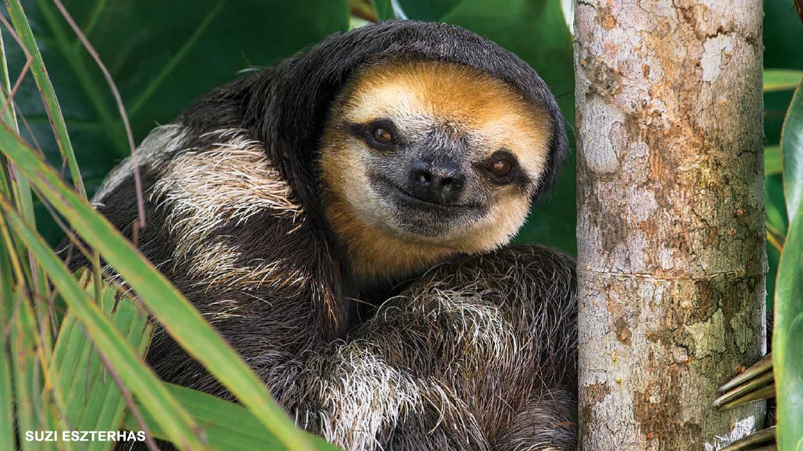 Smile—It's a Sloth!