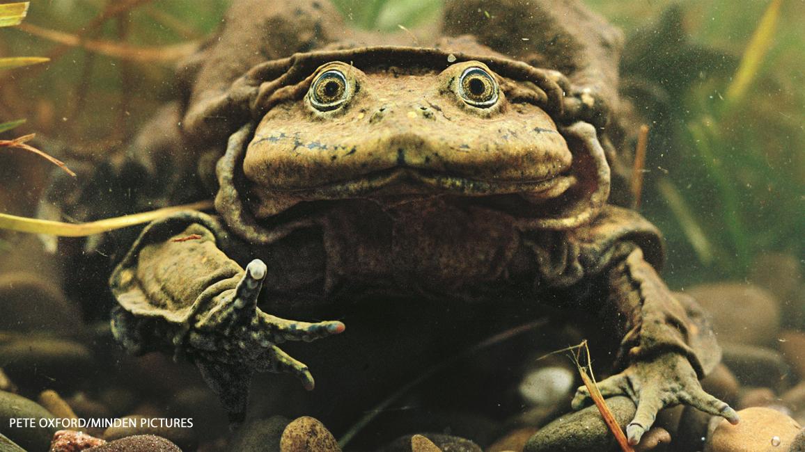 Saggy, Baggy Froggy