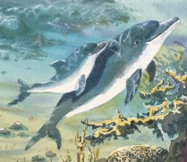 Illustration of a dolphin mother and newborn swimming together toward the surface.