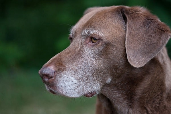 Common Reasons for Dog Limping