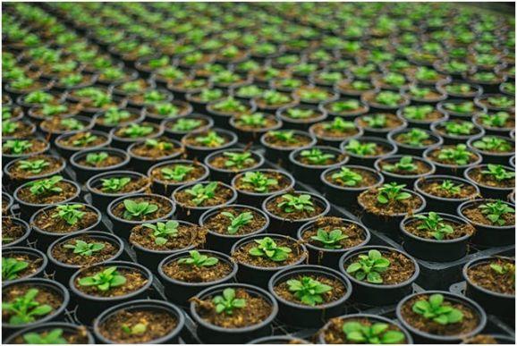 Bootstrap Farmer: A Garden Center Case In Point