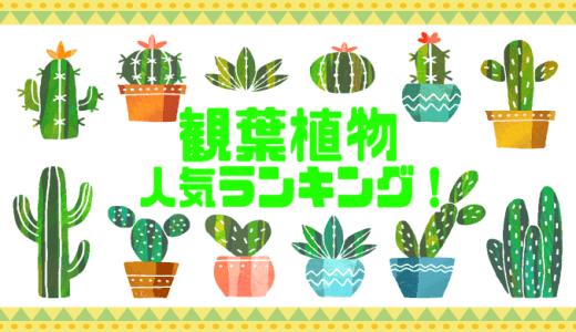 【インテリアランキング】観葉植物おすすめ人気ランキング!可愛いくて最高!【トップ10】