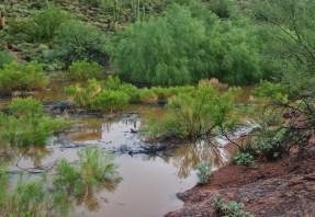 The Pond in Fountain Hills Desert Botanical Garden