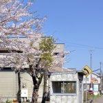 番外編(桜めぐり 2012 御崎のバス停)