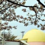 番外編 桜めぐり2009 (青少年科学館)