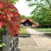 御傘山神社のツツジ