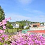 入江運動公園のツツジ 2