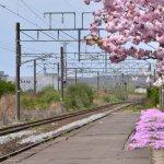 番外編 「桜めぐり 2014 御崎駅」