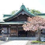 桜めぐり 2015 (室蘭八幡宮)