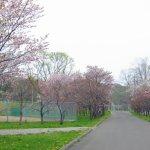 番外編 「桜めぐり2015」