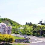 入江運動公園のツツジ