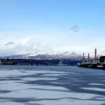 ハスの葉氷 2020