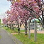 桜めぐり 2021(後編)
