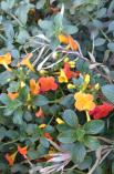 Nairobi-Flowers-Rantatonne00031