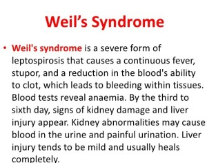 Complications of leptospirosis- Wells syndrome