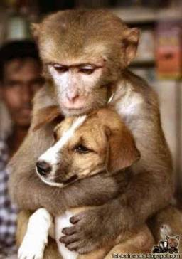 What is it with monkeys and dogs?