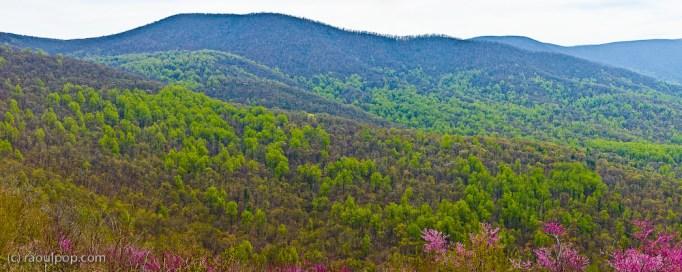 Shenandoah Valley Panoramic V-II