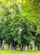 Chestnut hollow