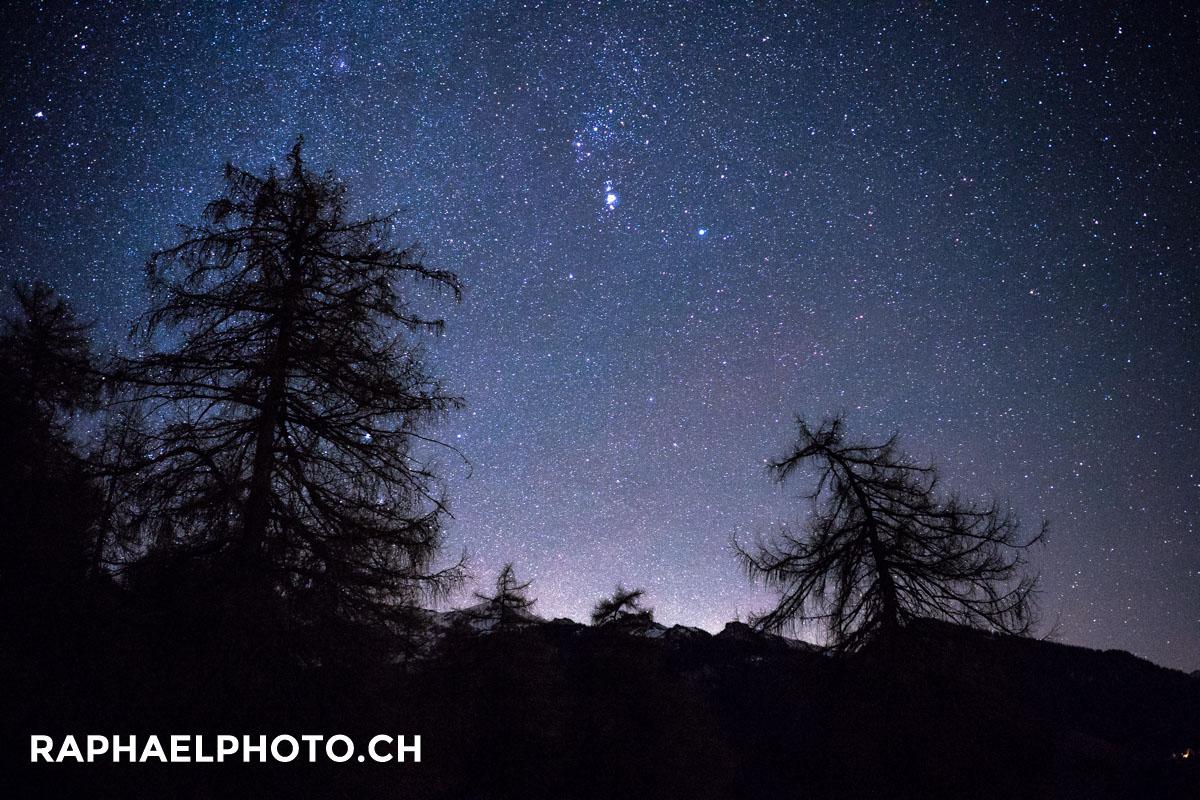 Krumme Tannen unter dem Sternenhimmelszelt