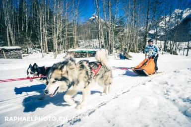 Husky-Gespann (Alaskan Malamut & andere)