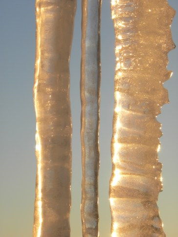 Golden icicle