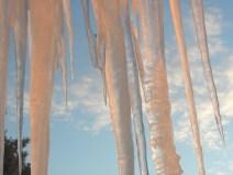 Blushing icicles