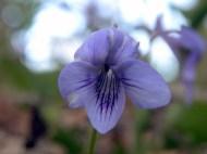 Different wildflower