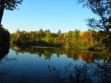 Reflections on the Pine River