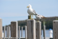 Sea gulls await summer boats