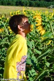 Kade sunflower