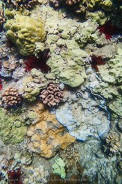 collection of corals