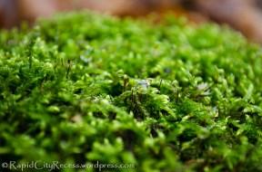 November moss