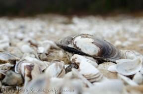 shell among shells