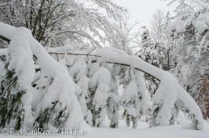 Bending tree...when will it break?