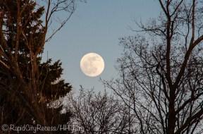 moon through trees-1