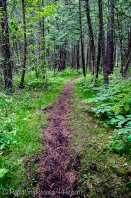 cedar swamp path