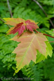 fall color in summer